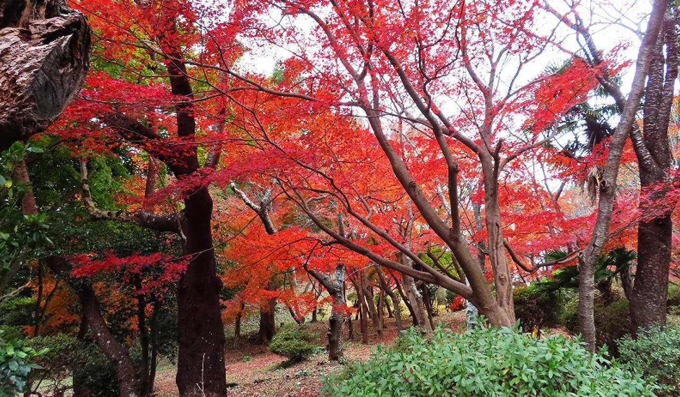 衣笠山の紅葉